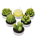 LA BELLEFÉE Velas Suculentas Plantas Cactus...