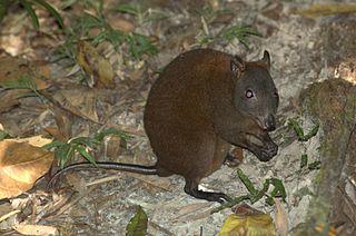Tipica rata entre inmundicia