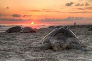 Tortugas en la playa al anochecer