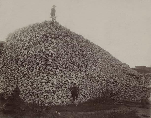 Enorme pila de cráneos de bufalo