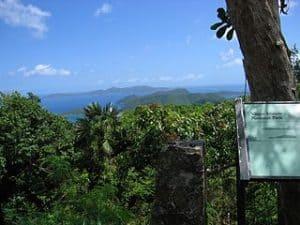 Islas Virgenes, vegetacion