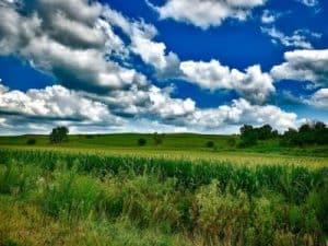 Paisaje de Estado de Iowa, cultivos de maiz