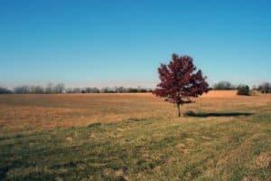 Paisaje de Estado de Kansas, llanura