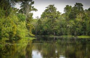Guia Hispana Louisiana: Sabor latino 1