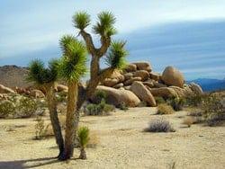 Paisaje de Estado de Nuevo Mexico, desierto