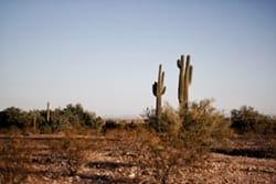 Guia Hispana Texas: Tierra de Cowboys Hispanos 1