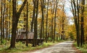 Paisaje de Estado de Vermont, bosque