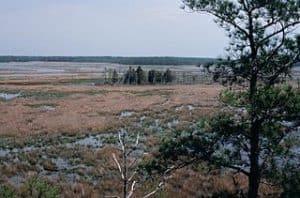 Vista de campos de almendros