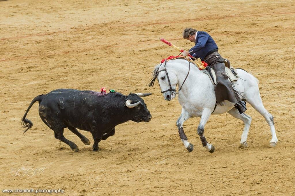 Rejoneador atacando al toro