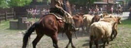 Vaquero con el ganado
