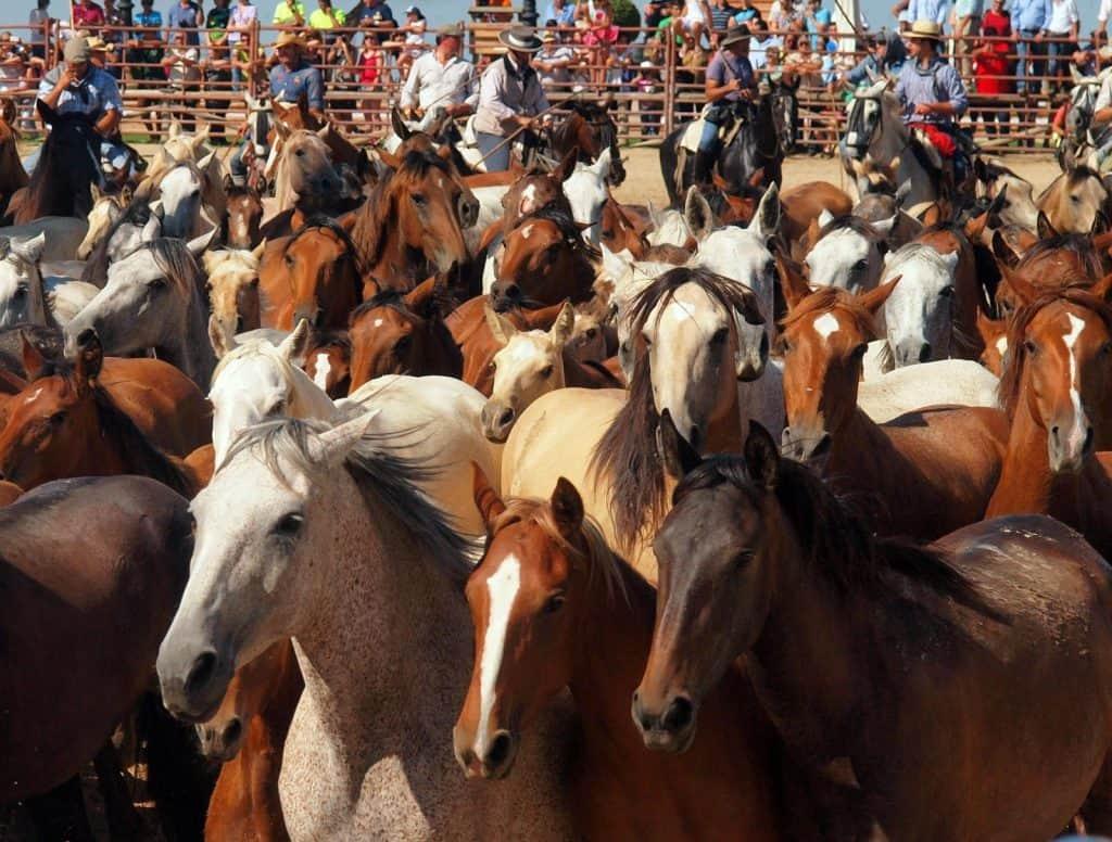Vaqueros andaluces llevando manada de yeguas